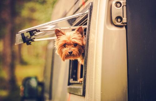 Transport d'animaux vivants